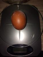 Яйцо (Маран) _1